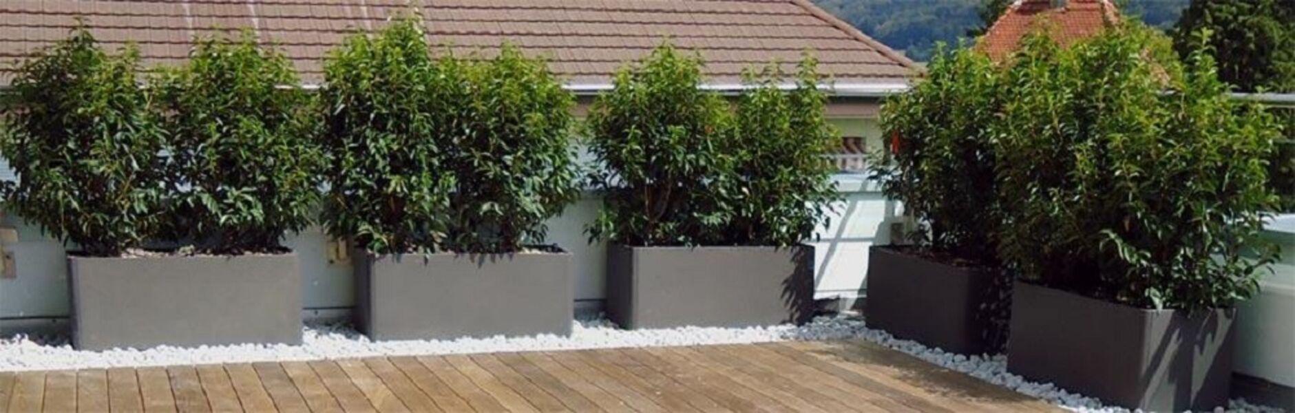 Terrassen Balkone Dachgarten Begrunung Gefasse Pflanzen